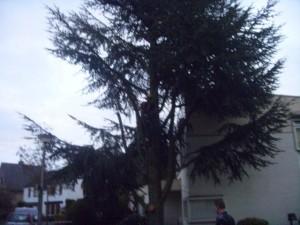 bomen kappen breda